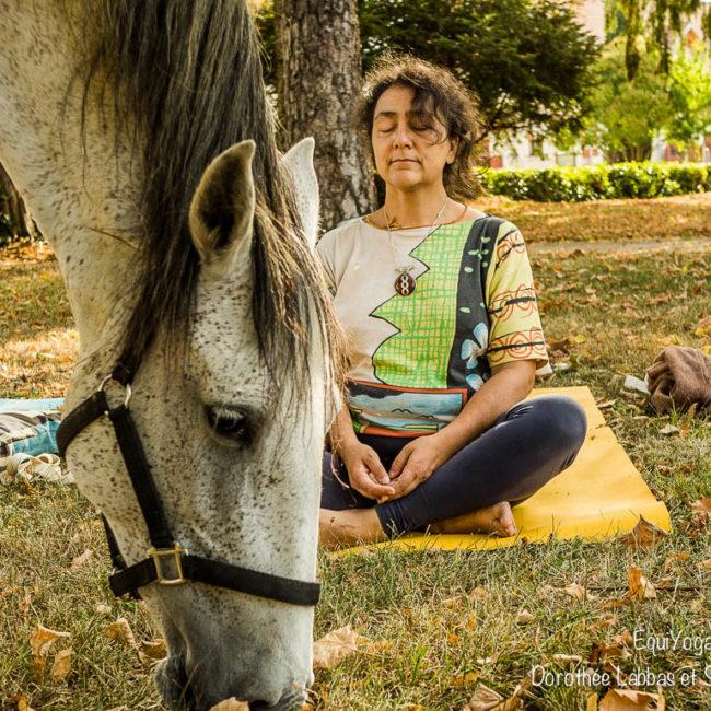 Yoga avec les chevaux