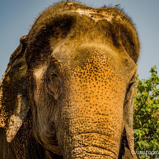 Yoga avec les éléphants